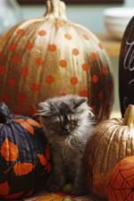 Gilded Pumpkins for Halloween